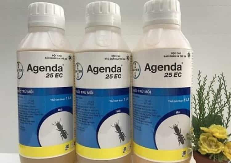 7 Lưu ý khi sử dụng thuốc diệt mối để tránh ngộ độc - diệt mối Nha Trang