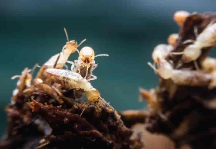 Môi trường sống và thức ăn của mối là gì - diệt mối Nha Trang- mối và mối liên hệ với môi trường đất và nước