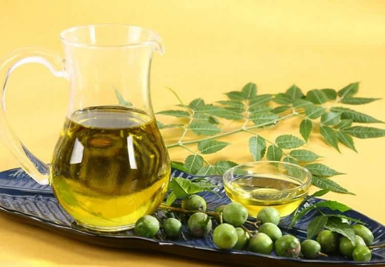 8 Cách diệt mối trong nhà hiệu quả tốt - diệt mối bằng dầu neem